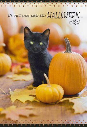 Across the Miles Cat and Pumpkin Halloween Card