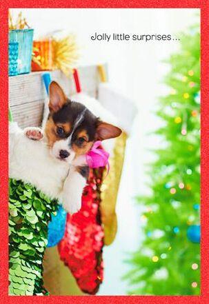 Dog in Stocking