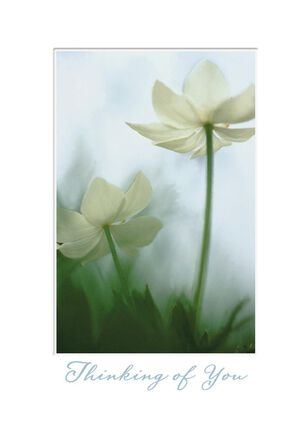 Paperwhite Blossoms Sympathy Card