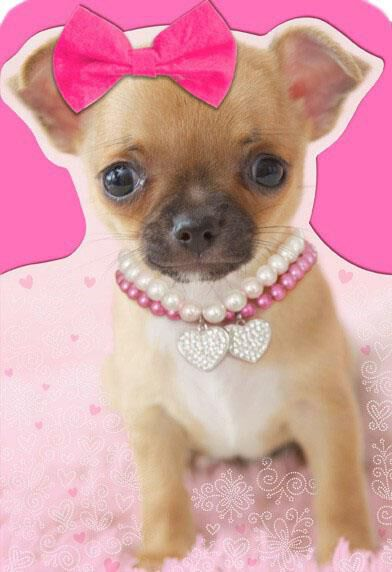 Puppy With Removable Bow Valentineu0027s Day Card