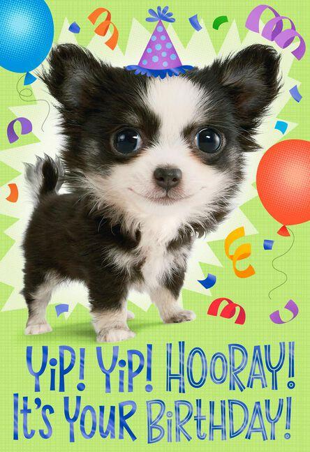 Yip Yip Hooray Birthday Card For Nephew Greeting Cards Hallmark