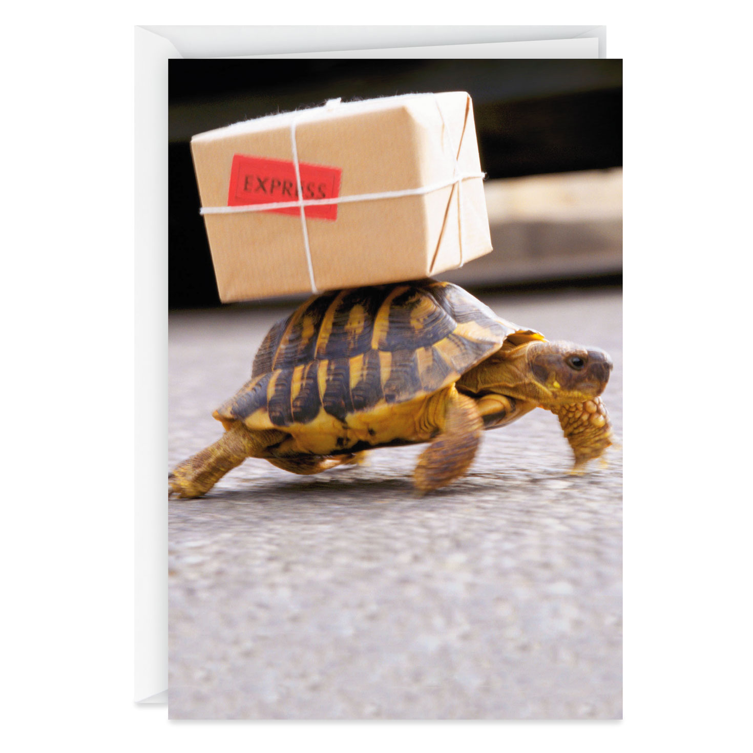 Turtle Carrying A Package Funny Belated Birthday Card
