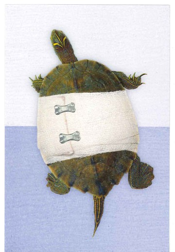 bandaged turtle get well card - greeting cards