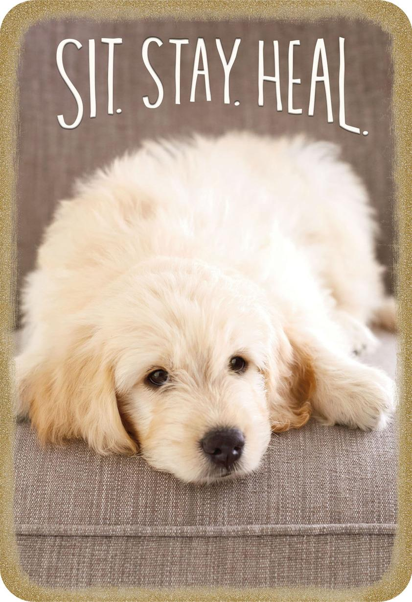 sit  stay  heal puppy dog speedy recovery card