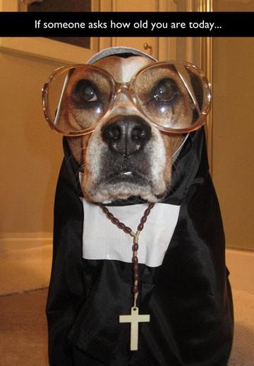 dog in a nun costume funny birthday card  greeting cards  hallmark, Birthday card