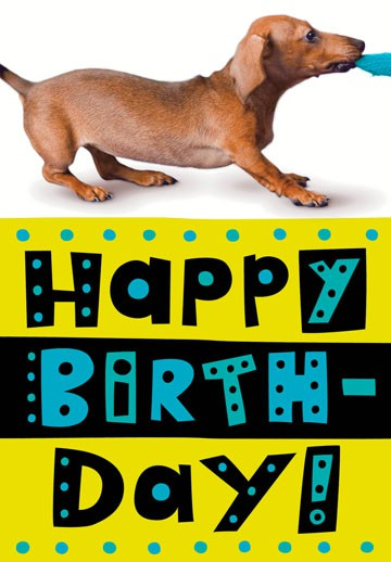 weiner dog funny birthday card  greeting cards  hallmark, Birthday card