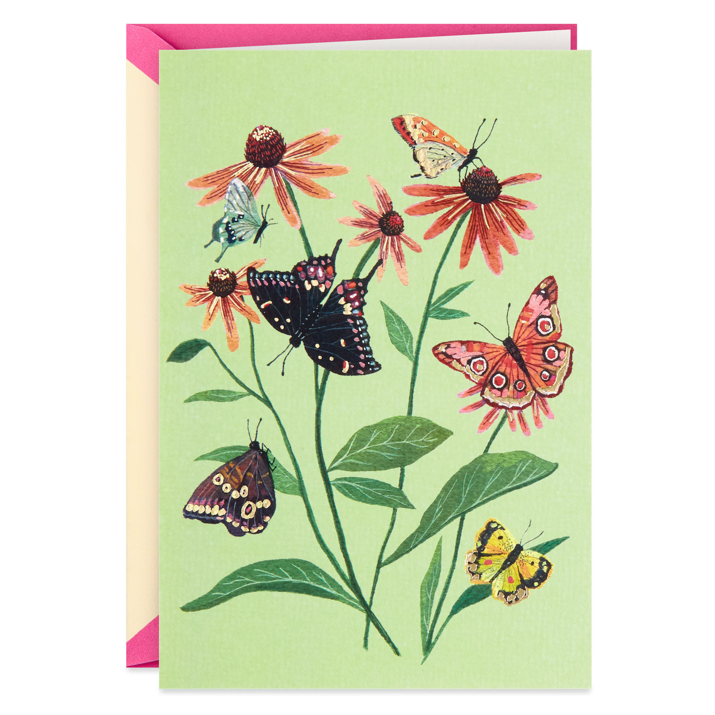 butterflies and coneflowers blank card  greeting cards