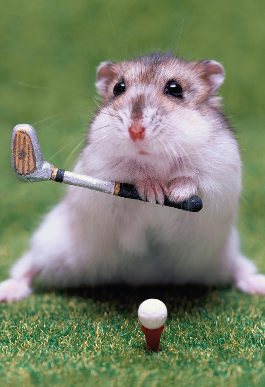 Hamster Playing Golf Funny Birthday Card Greeting Cards Hallmark