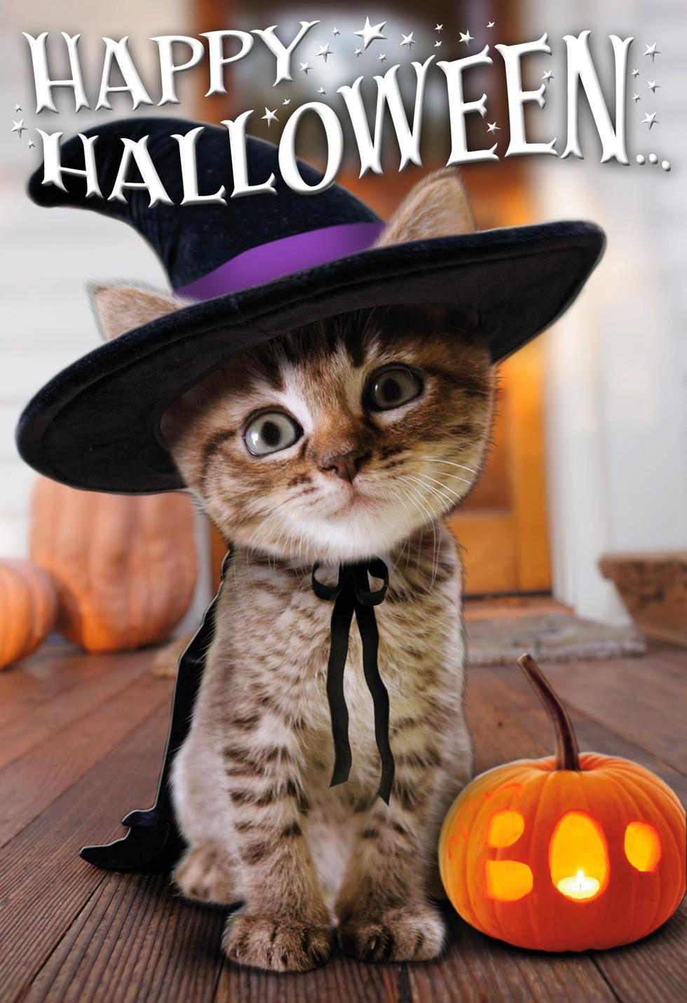 cute halloween kitten witch halloween card