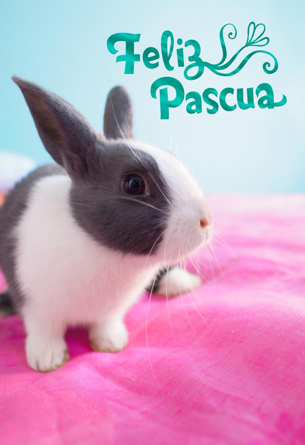 feliz pascua gray bunny spanish easter card