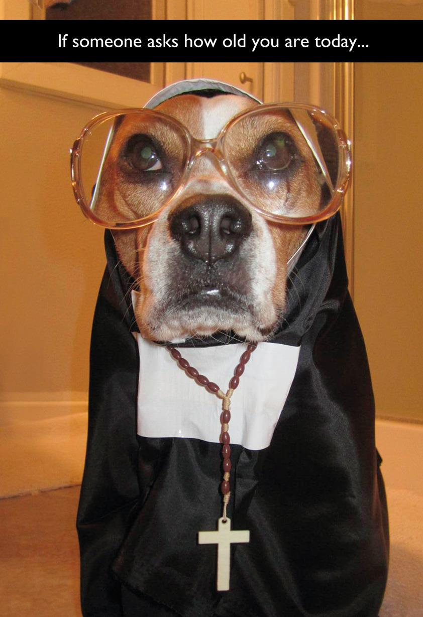 dog in a nun costume funny birthday card greeting cards