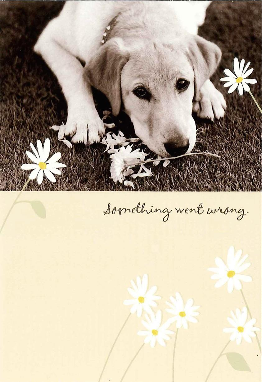 Something Went Wrong Apology Card Greeting Cards Hallmark – Free Printable Apology Cards