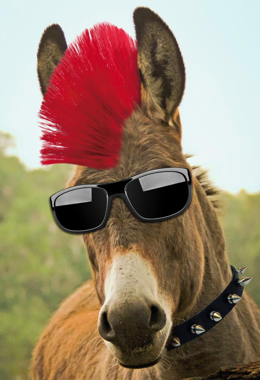 badass donkey with red mohawk funny birthday card