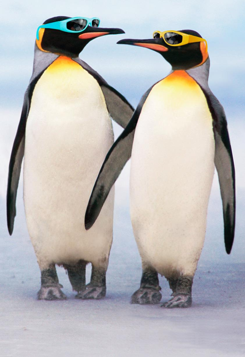Cool Couple Of Penguins In Sunglasses Anniversary Card