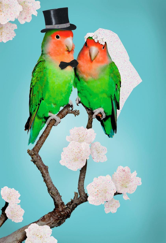 congratulations  lovebirds wedding card - greeting cards