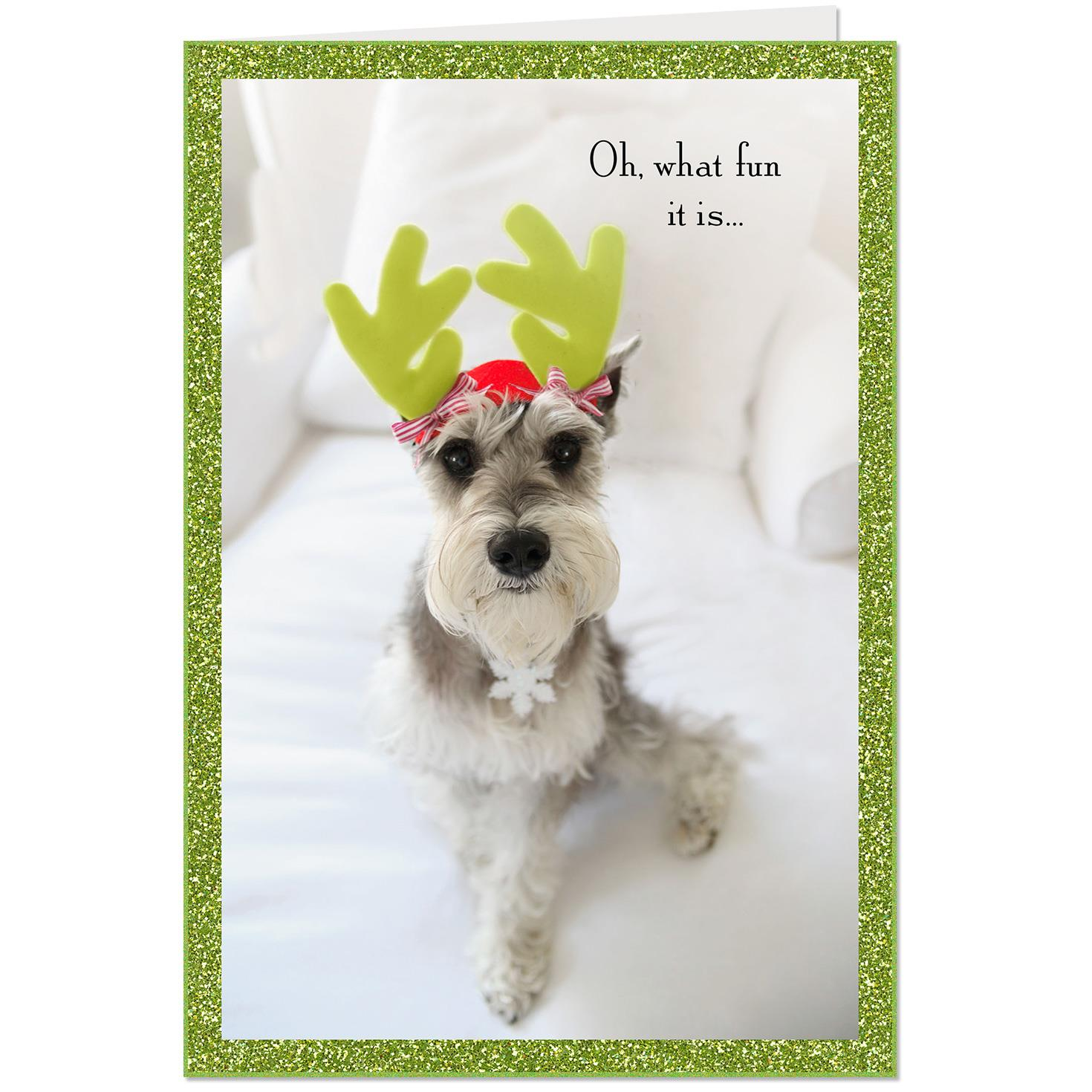 Oh What Fun Dog In Antlers Christmas Card Greeting Cards Hallmark