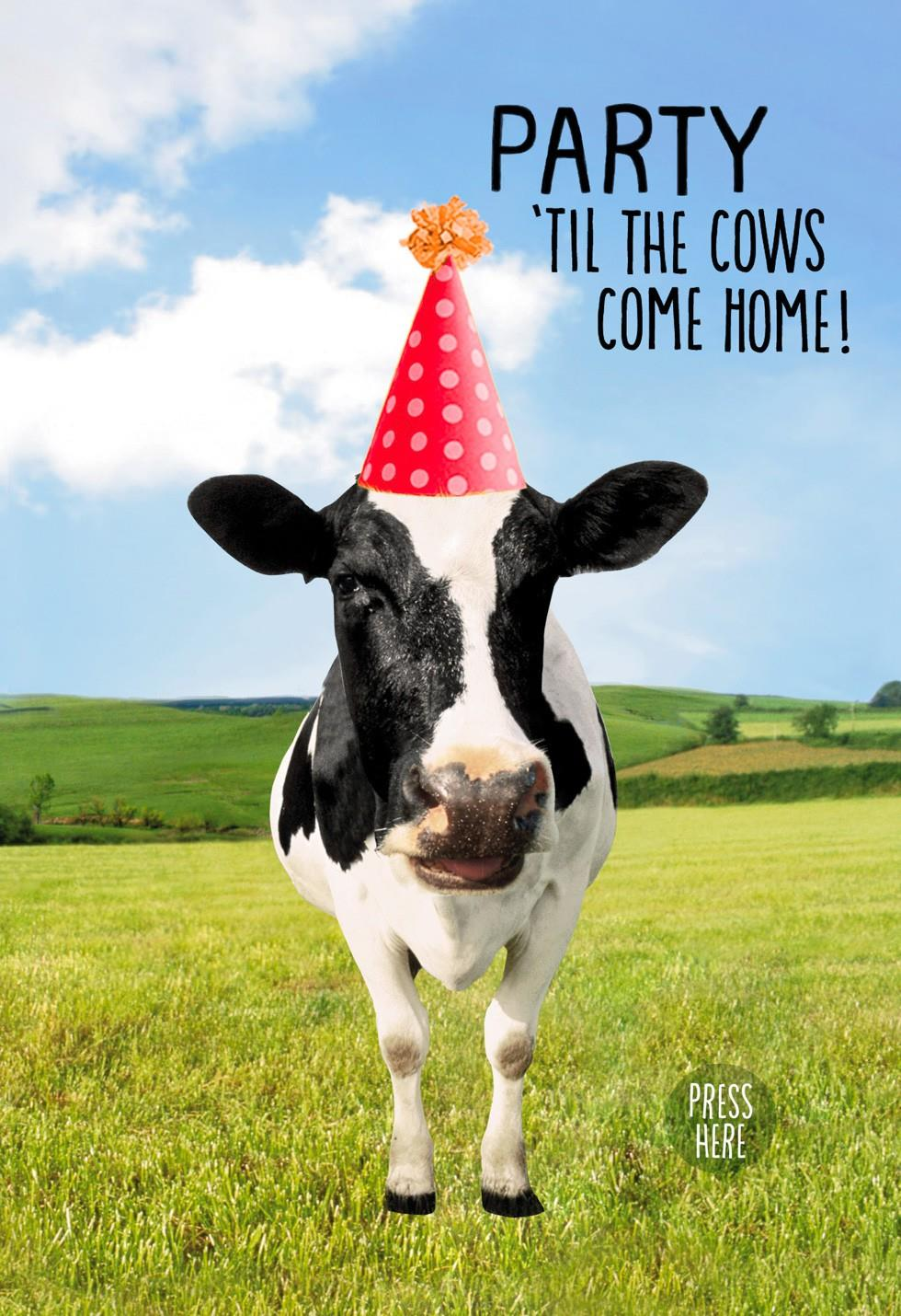 Dancing Cow Musical Birthday Card With Motion
