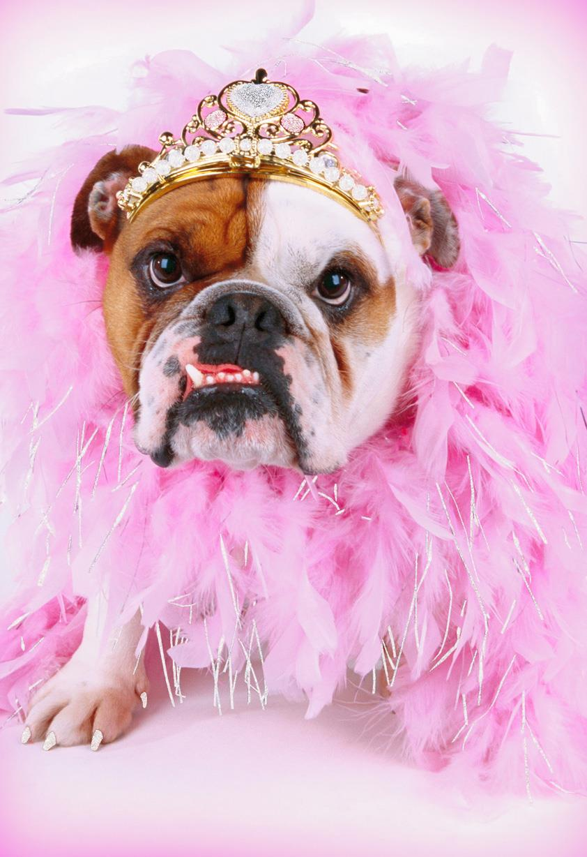 fancy bulldog in a tiara funny thinking of you card