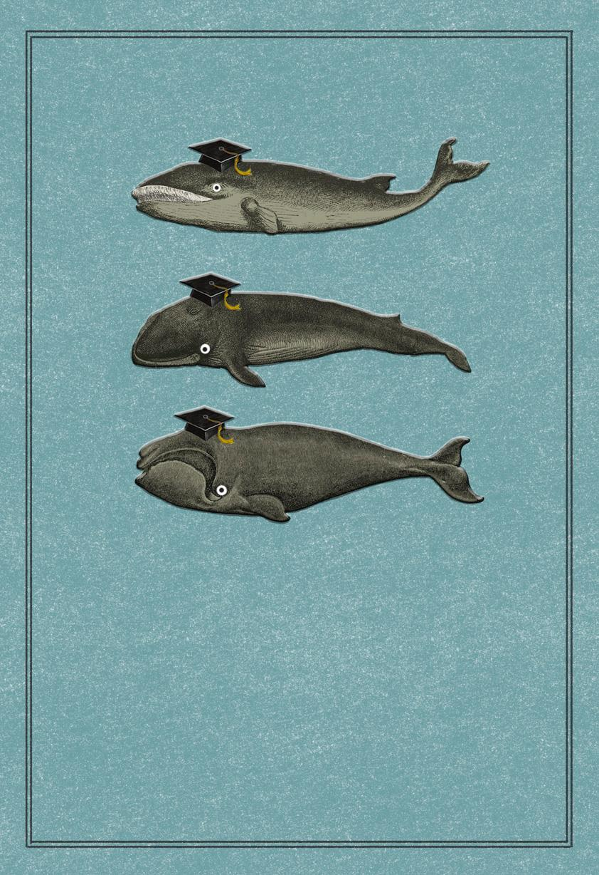 Whale Whale Whale Funny Graduation Card Greeting Cards