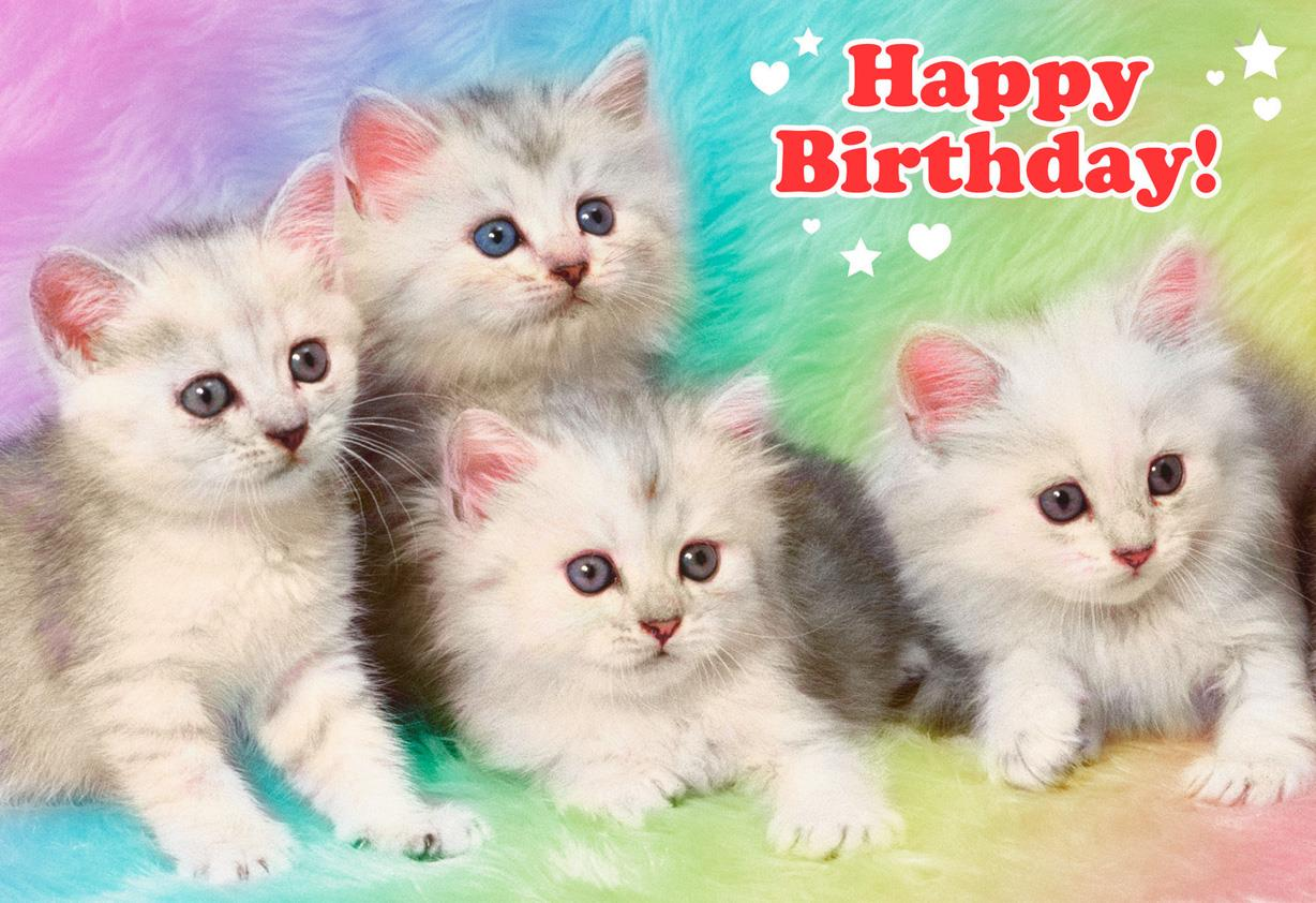 Extremely Cute Kittens Funny Birthday Card