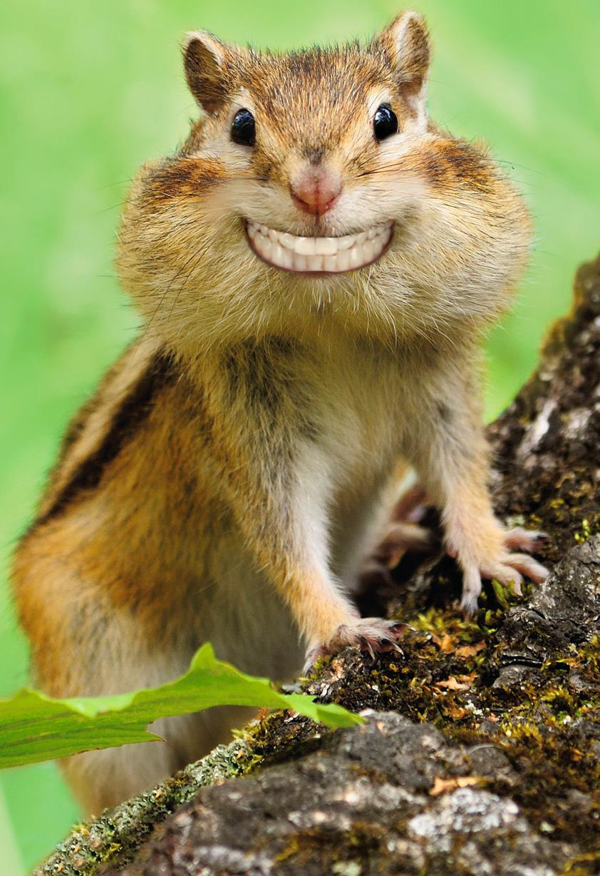 Grinning Chipmunk Funny Congratulations Card root 369ZZS9018 PV.1.ZZS9018.jpg Source Image
